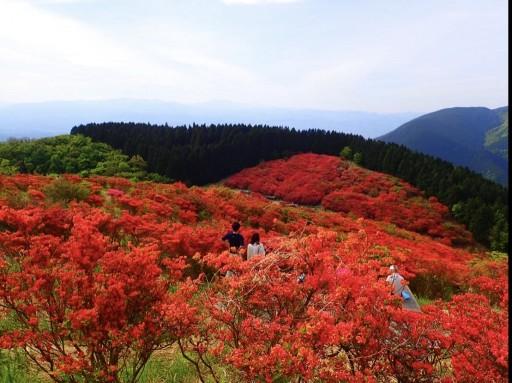 【奈良】5/15(土) 大和葛城山の百万本のツツジが見たい!
