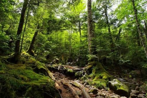 北八ヶ岳苔の森(麦草峠〜白駒池〜ニュウ)