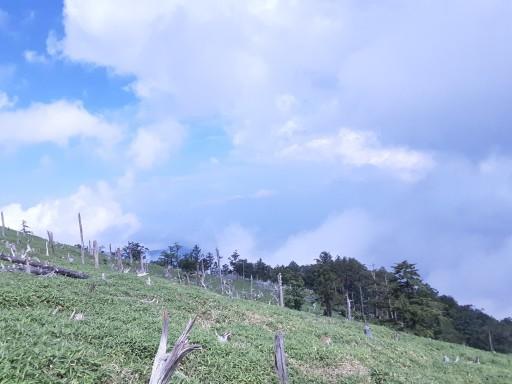 11/6(土)~7(日)に大台ヶ原に行きませんか?